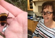Woman Rescues Wingless Queen Bee; Builds Her a Tiny Garden to Live Out Final Days