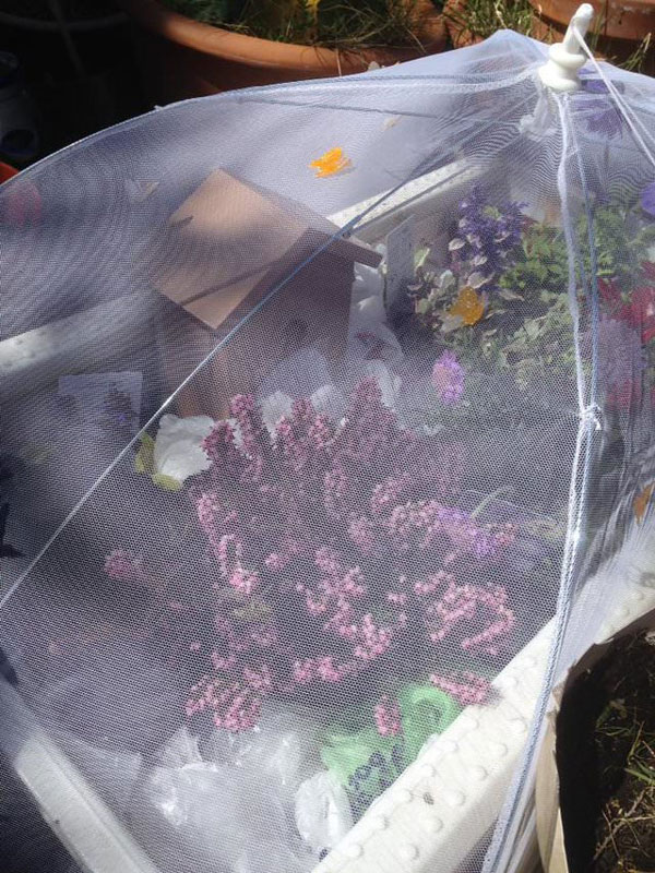 woman rescues wingless queen bee builds her a tiny garden to live out final days 4 Woman Rescues Wingless Queen Bee; Builds Her a Tiny Garden to Live Out Final Days