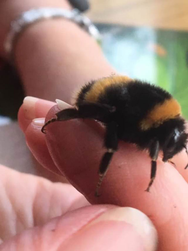 woman rescues wingless queen bee builds her a tiny garden to live out final days 8 Woman Rescues Wingless Queen Bee; Builds Her a Tiny Garden to Live Out Final Days