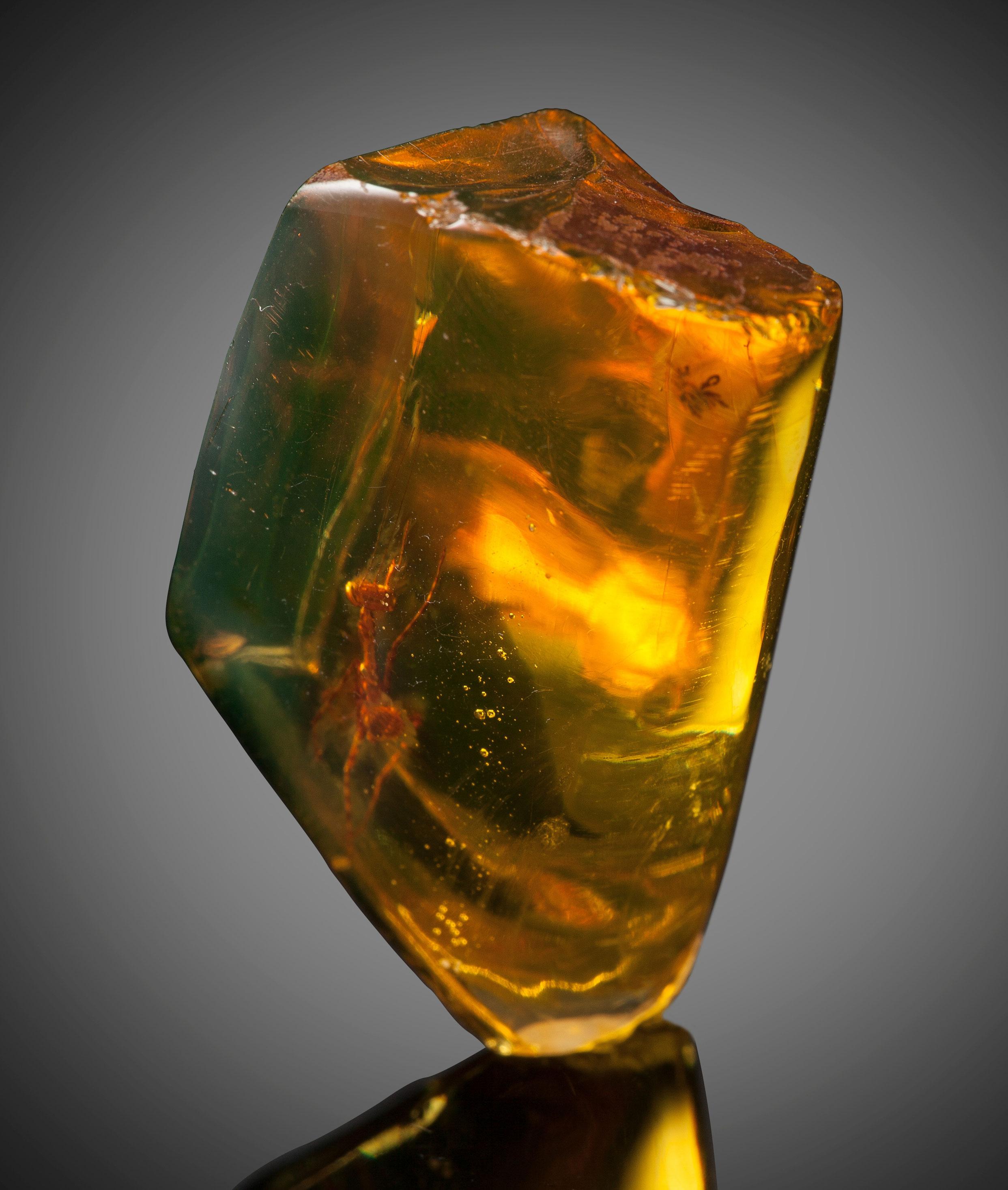 a 12 million year old praying mantis encased in amber 3 A 12 Million Year Old Praying Mantis Encased in Amber