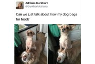 A Simple Tweet About Two Dogs Unfolded Into a Beautiful Twitter Story