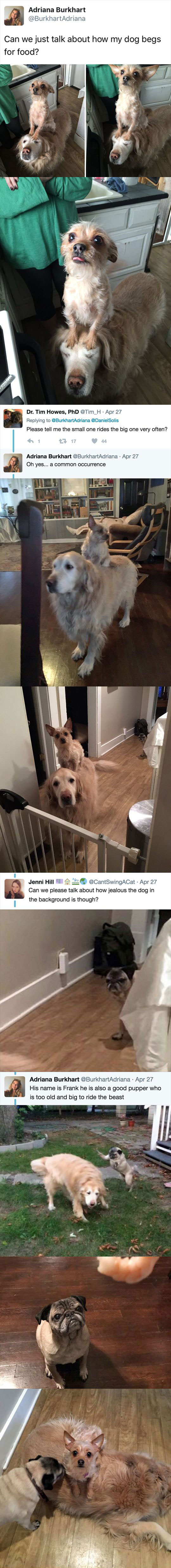 dog standing on dog begging for food 4 A Simple Tweet About Two Dogs Unfolded Into a Beautiful Twitter Story