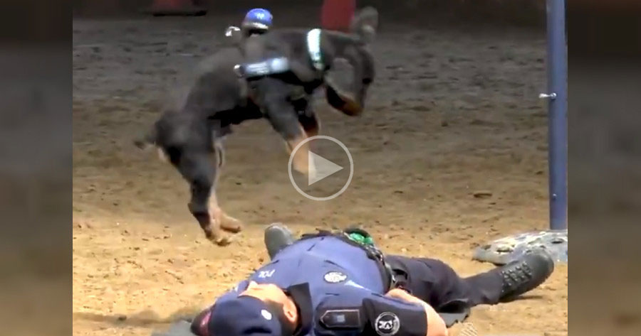 Poncho the Police Dog Goes Viral With Spirited CPR Demonstration
