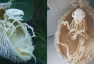 Hedgehog Skeleton is 🔥