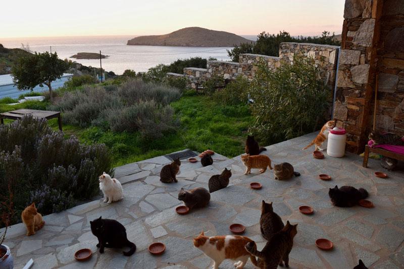 job post goes viral as cat sanctuary on greek island seeks caretaker 7 Job Post Goes Viral As Cat Sanctuary on Greek Island Seeks Caretaker