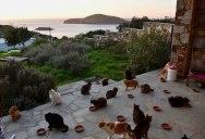 Job Post Goes Viral As Cat Sanctuary on Greek Island Seeks Caretaker