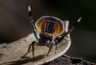 Mate or Be Killed: Spider Must Put on Dance of a Lifetime