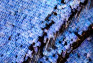 Extreme Close-Ups of Butterfly Wings by Chris Perani