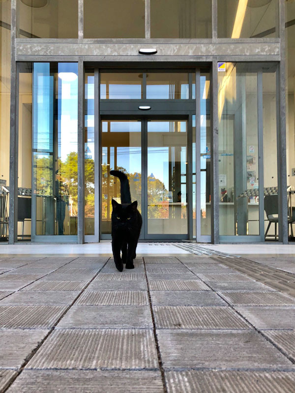 museum cats japan 13 Two Cats Have Been Trolling Museum Security for Over 2 Years Now