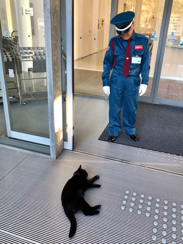 museum cats japan 14 Two Cats Have Been Trolling Museum Security for Over 2 Years Now
