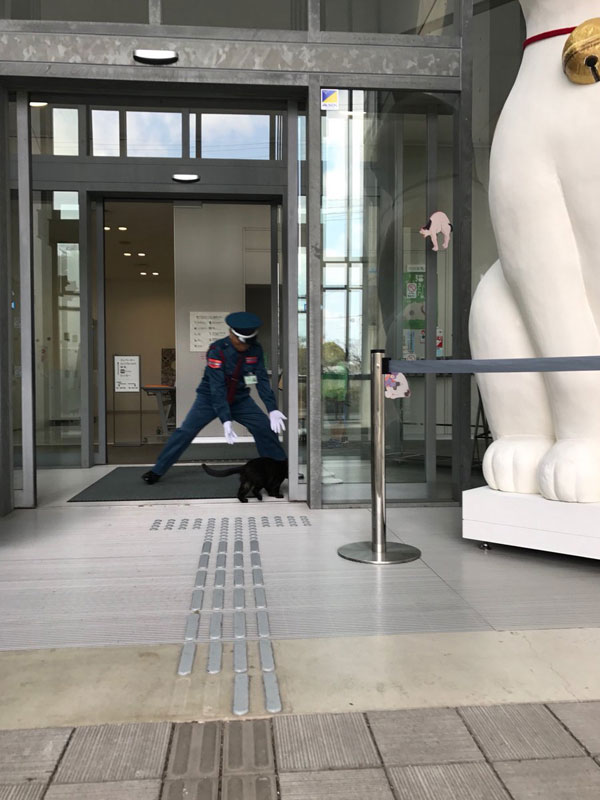 museum cats japan 3 Two Cats Have Been Trolling Museum Security for Over 2 Years Now
