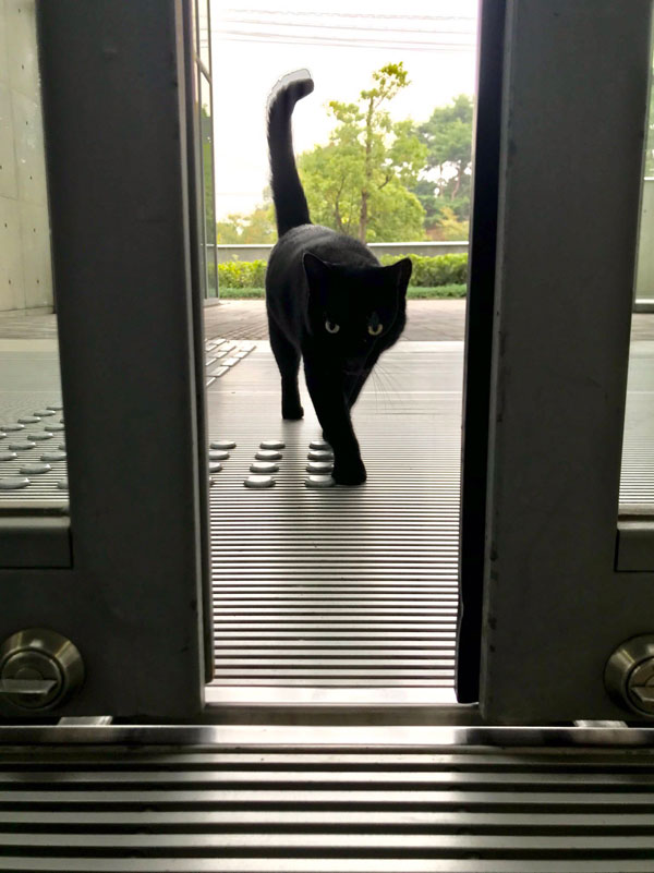 museum cats japan 6 Two Cats Have Been Trolling Museum Security for Over 2 Years Now