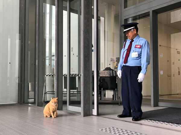 museum cats japan 7 Two Cats Have Been Trolling Museum Security for Over 2 Years Now