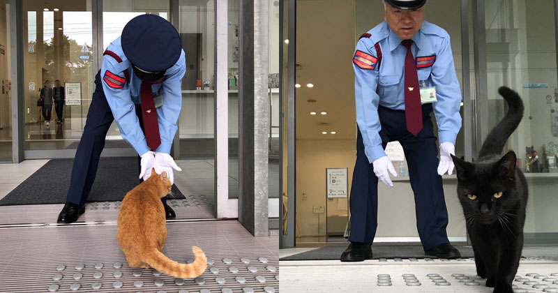 Two Cats Have Been Trolling Museum Security for Over 2 Years Now