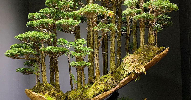 This Bonsai Forest By Masahiko Kimura Is Incredible Twistedsifter
