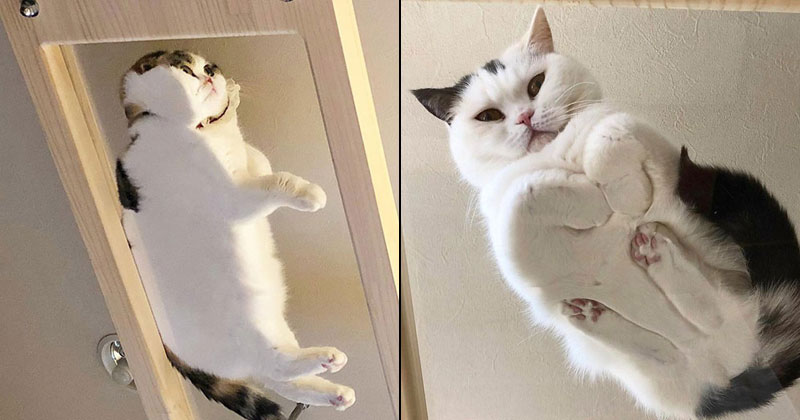 21 Photos of Cats Sitting on Glass Tables, Please Disregard