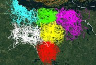 Amazing Map Uses GPS Locations to Show How Territorial Wolf Packs Are