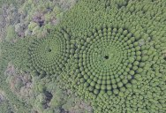 In 1973 Japan Planted an Experimental Forest, Today It Looks like This