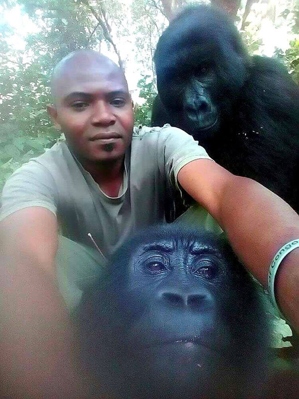 gorilla selfie standing 1 Its Only April and We Already Have the Best Selfie of the Year