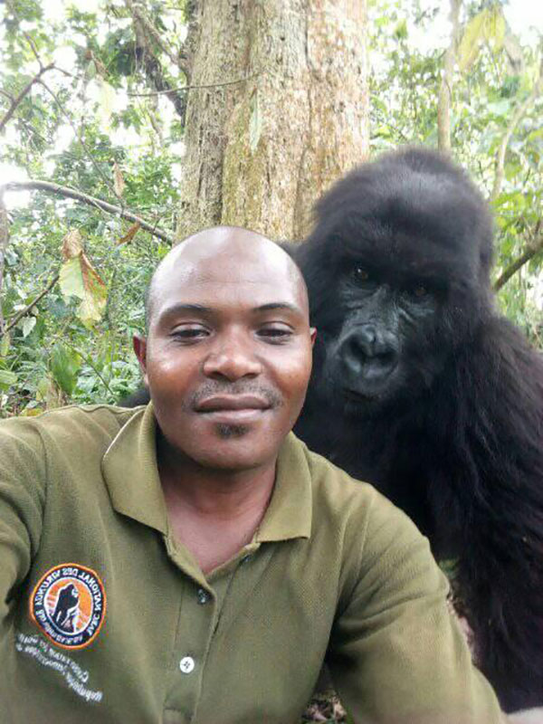gorilla selfie standing 3 Its Only April and We Already Have the Best Selfie of the Year
