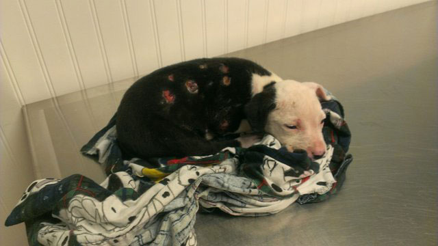 jake the puppy saved from a fire that went on to become a firefighter 19 Jake, the Puppy Saved From a Fire, that Went On To Become a Firefighter