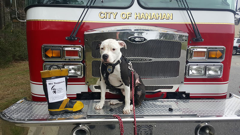 jake the puppy saved from a fire that went on to become a firefighter 2 Jake, the Puppy Saved From a Fire, that Went On To Become a Firefighter