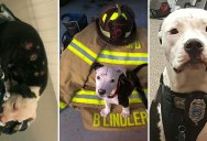 Jake, the Puppy Saved From a Fire, that Went On To Become a Firefighter