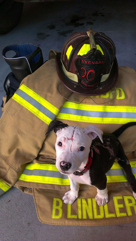 jake the puppy saved from a fire that went on to become a firefighter 5 Jake, the Puppy Saved From a Fire, that Went On To Become a Firefighter