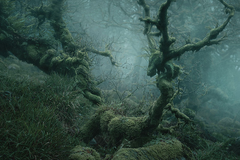mystical by nei burnell 1 Theres a Real Life Enchanted Forest and Its In Dartmoor, England