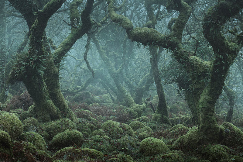mystical by nei burnell 2 Theres a Real Life Enchanted Forest and Its In Dartmoor, England