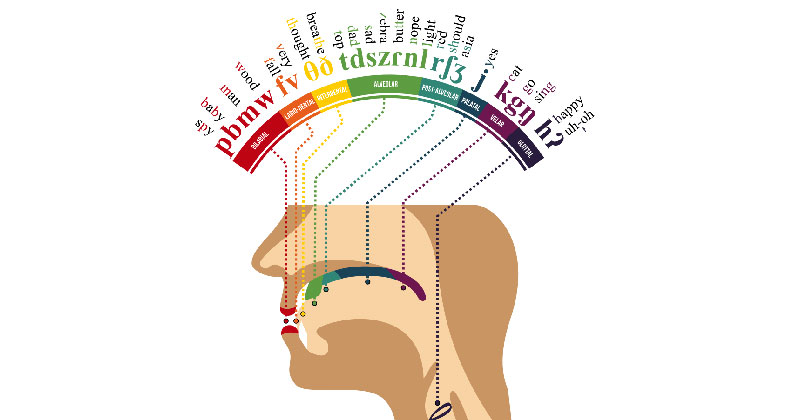 A Phonetic Map English Of The Human Mouth Twistedsifter
