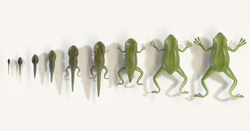 This Seamless Animation of a Tadpole to Frog Metamorphosis is Fantastic