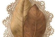Artist Crochets New Life Into Fallen Leaves