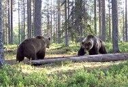 Insane Bear Fight Caught on Video