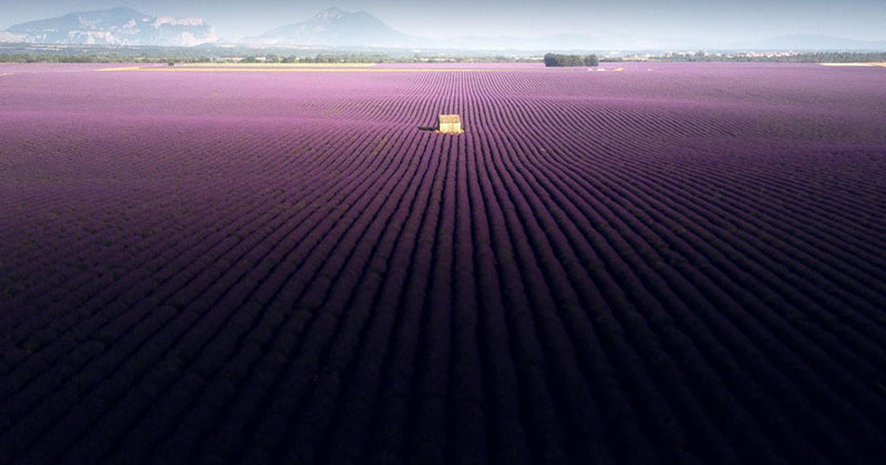 These Aerial Views of a Lavender Field in Valensole, France are Incredible