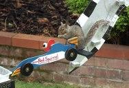 The Furmula 1 Squirrel Grand Prix, Because Internet