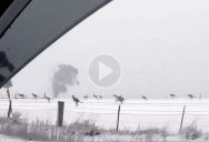 It's Snowing in Australia and Kangaroos are Hopping Around Confused