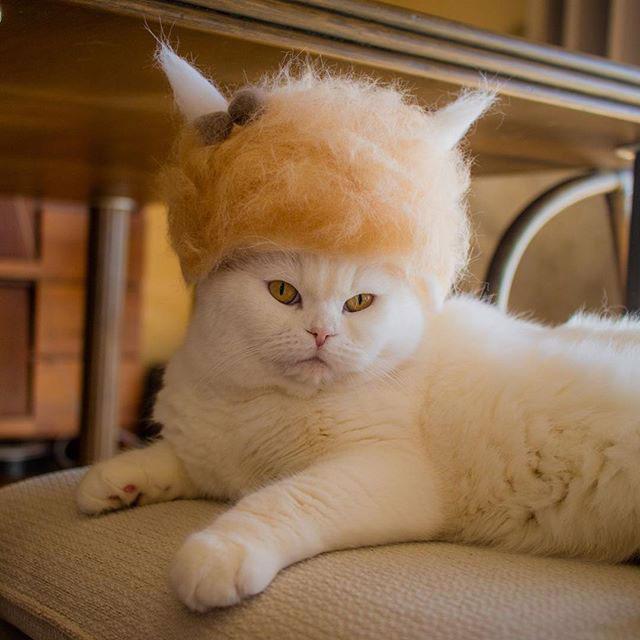 cat hats made from shedded fur 1 These Artists Turn Their Cats Shedded Fur Into Tiny Cat Hats