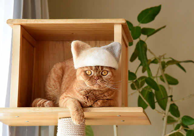 cat hats made from shedded fur 10 These Artists Turn Their Cats Shedded Fur Into Tiny Cat Hats