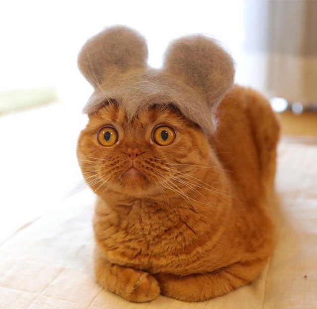 cat hats made from shedded fur 11 These Artists Turn Their Cats Shedded Fur Into Tiny Cat Hats