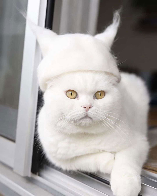 cat hats made from shedded fur 12 These Artists Turn Their Cats Shedded Fur Into Tiny Cat Hats