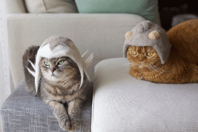 cat hats made from shedded fur 18 These Artists Turn Their Cats Shedded Fur Into Tiny Cat Hats