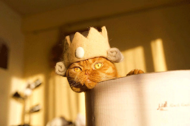 cat hats made from shedded fur 20 These Artists Turn Their Cats Shedded Fur Into Tiny Cat Hats