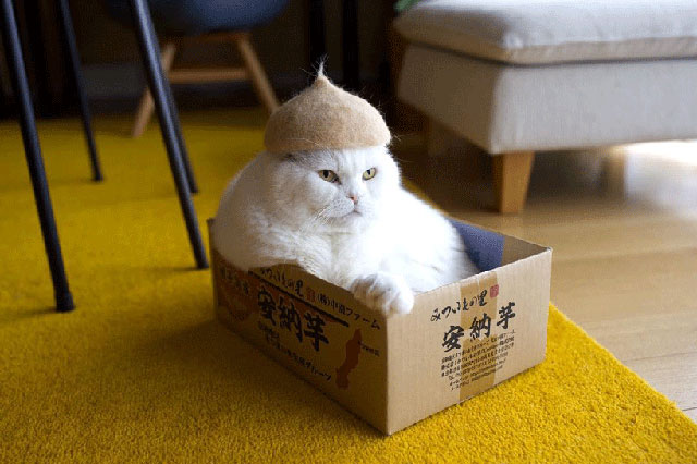 cat hats made from shedded fur 21 These Artists Turn Their Cats Shedded Fur Into Tiny Cat Hats