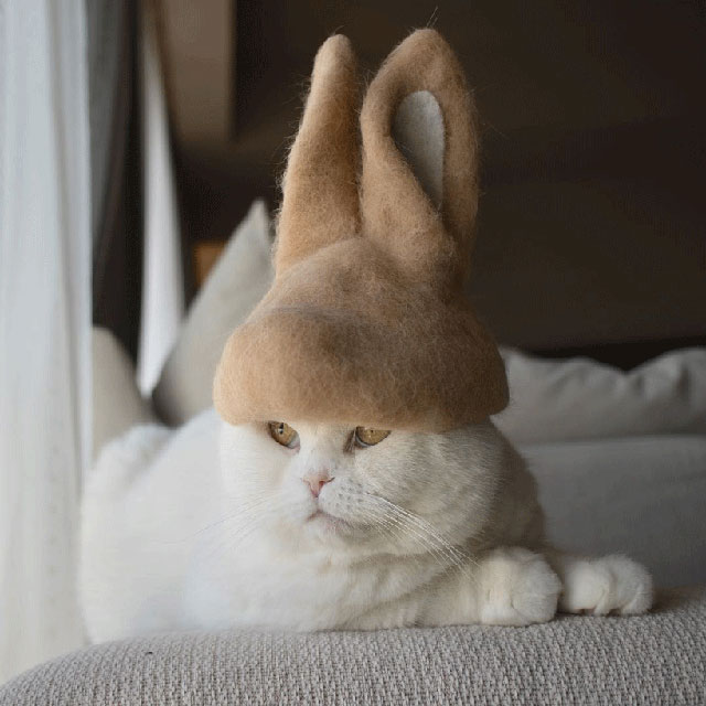 cat hats made from shedded fur 22 These Artists Turn Their Cats Shedded Fur Into Tiny Cat Hats