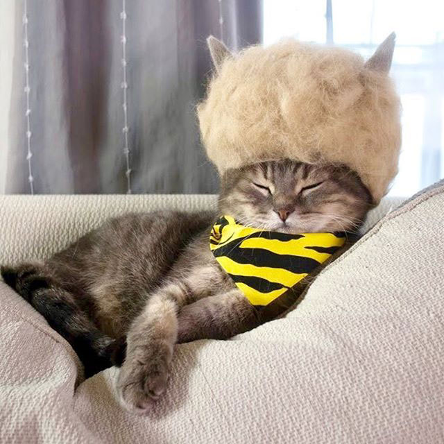 cat hats made from shedded fur 3 These Artists Turn Their Cats Shedded Fur Into Tiny Cat Hats