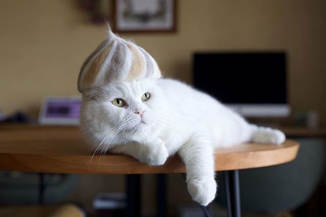 cat hats made from shedded fur 5 These Artists Turn Their Cats Shedded Fur Into Tiny Cat Hats