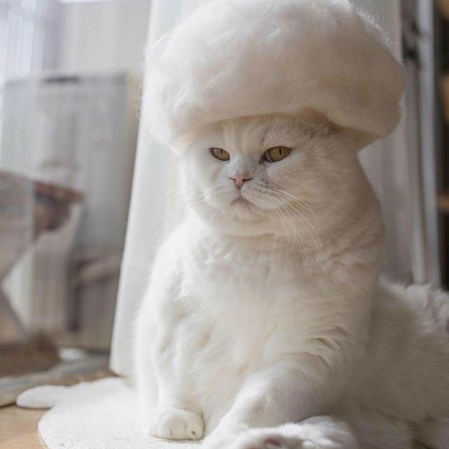 cat hats made from shedded fur 8 These Artists Turn Their Cats Shedded Fur Into Tiny Cat Hats