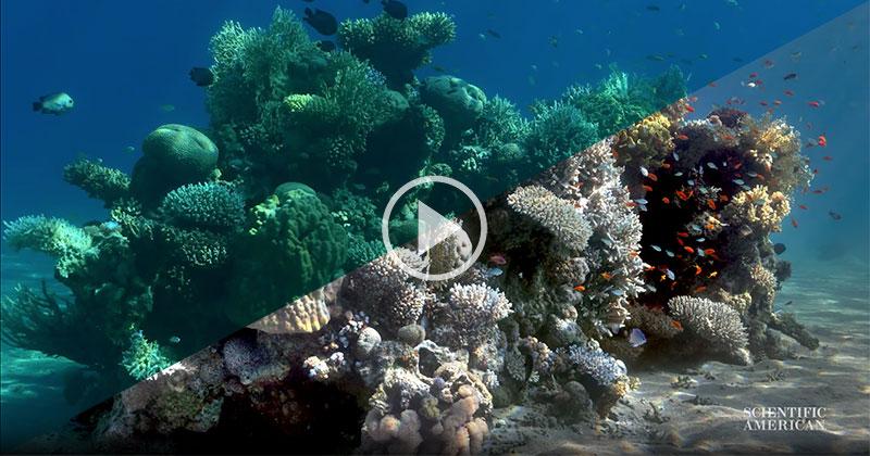 Oceanographer Creates Algorithm to Remove Water From Underwater Images