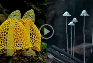 Mesmerizing Compilation of Mushroom Bloom Timelapses